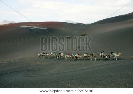 Camel ride at Timanfaya National Park Lanzarote Canary Islands Spain poster