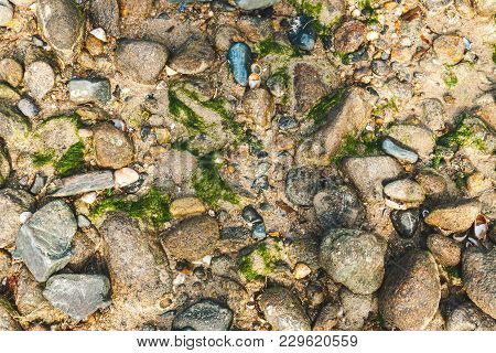 Variety Of Colorful Rocks, Stones, Shells And Moss Of Different Size On Wet Sand. For Textures And B