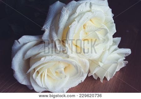 White Roses Covered With Dew, Close Up. Three Roses On A Wooden Background