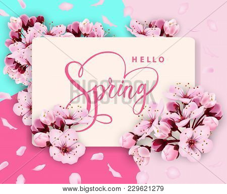 Hello Spring Vector Banner Design With Flowers Cherry And Frame. Spring Sale With Cherry Blossoms Ba