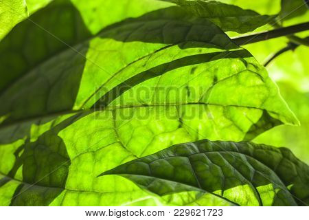 Green Leaf Macro Photo With Shadows Pattern, Natural Background Photo With Selective Focus