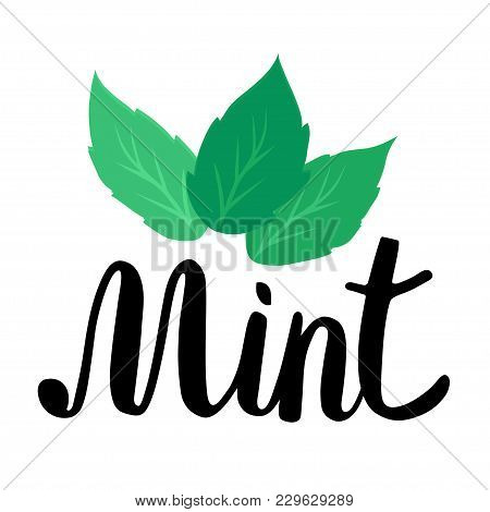 Lettering Mint. Handwritten Inscription With Green Mint Leaves. Illustration On White Background.