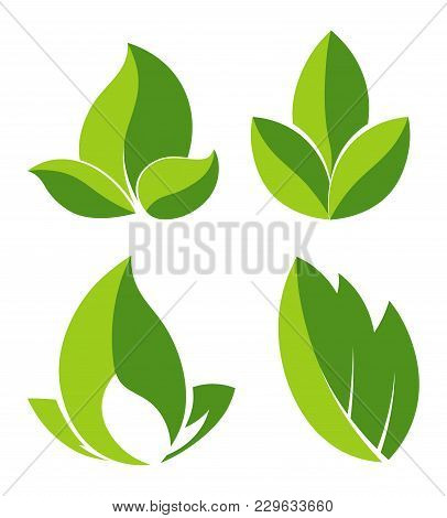 Green Leaves As Logotypes For Eco Companies Set. Foliage From Tree As Symbol Of Nature And Purity Fo