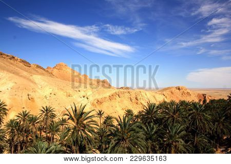 An Oasis In The Desert, Blue Sky, Rocks And Palm Trees