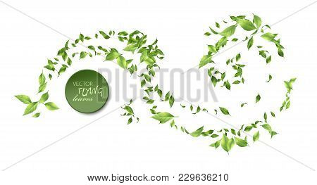 Vector Abstract Foliage Background. Green Flying Leaves On White Background