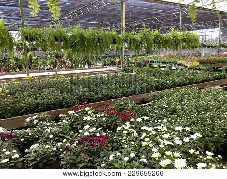 Greenhouse With All Kinds Of Flowers, Neat