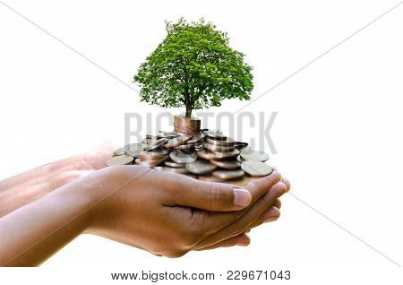 Hand Tree Coin Isolate Hand Coin Tree The Tree Grows On The Pile. Saving Money For The Future. Inves