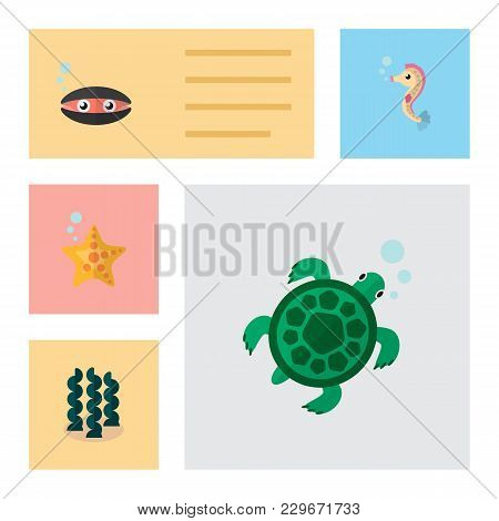 Icon Flat Marine Set Of Starfish, Seashell, Sea Horse And Other  Objects. Also Includes Sea, Spiruli