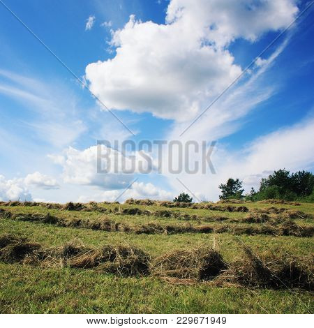 Hay Cleaning. Haymaking. Sunny Summer Day. Country Field. Toned Photo. Journey To The North Of Russi