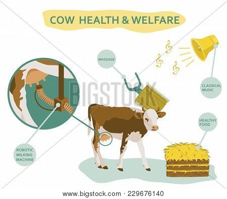 Infographic Of Cow Welfare Including Usage Of Massage Head, Healthy Food, Classical Music Etc. Healt