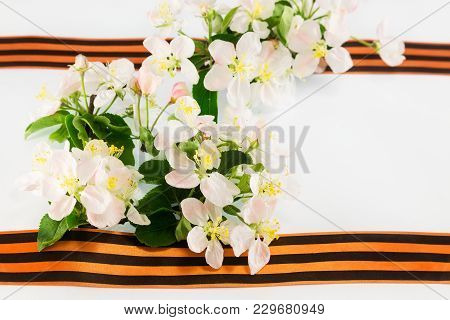 Postcard On May 9. St. George Ribbon And Flowering Apple Tree Branch On A White Background