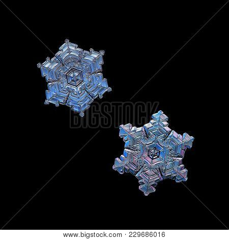 Two Snowflakes Isolated On Black Background. Macro Photo Of Real Snow Crystals: Small Star Plates Wi