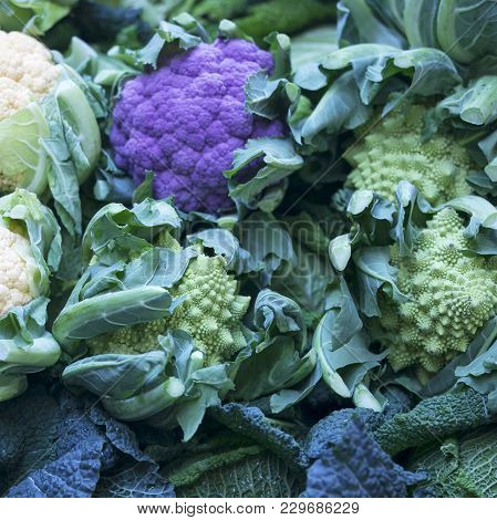 The Colorful Purple, Green And Yellow Cauliflower