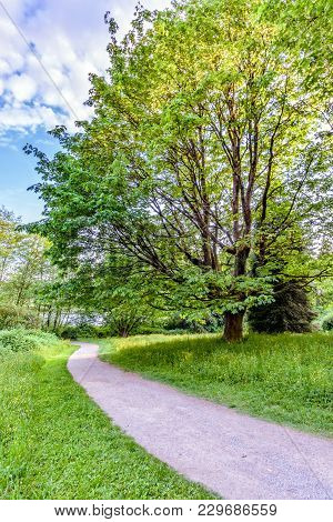 A Dirt Path In A Green Forest With Trees And Bushes, Walking Down Between The Grass, Under A Blue Cl