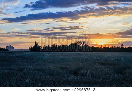 Green Canola Field, The Sunset Of The Yellow Sun Behind A Tree Grove, The Industrial Grain Terminal