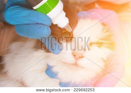 Vet Doctor Buries Eyes Medicine Sick Cat.