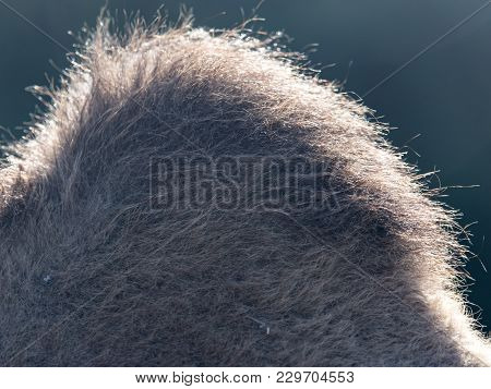 The Hump Of A Camel . Photo Of An Abstract Texture