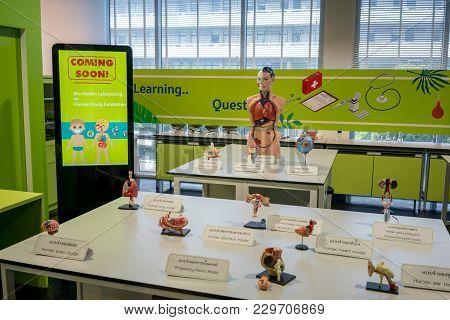 Nsm Science Square, Bangkok, Thaialnd, Mar 2, 2018 : Human Body And Organ Model Display In Education