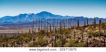 Arizona Desert Mountains And Cactus Landscape In The Southwest