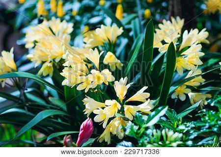 Beautiful Yellow Crocuses In The Springtime. Best Picture Of The Yellow Floral Decoration. Great Clo