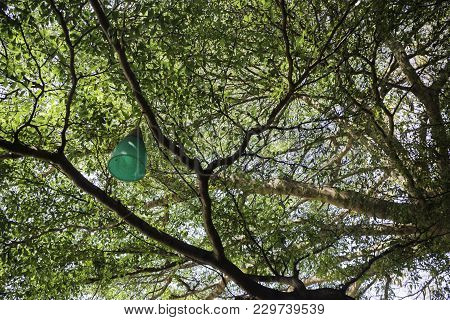Decorative Outdoor Light Hanging On Tree, Stock Photo