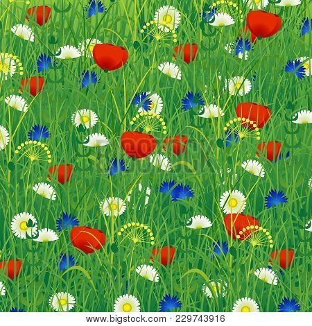 Summer Meadow With Herbs And Flowers - Poppy, Chamomile, Cornflower. Colorful Background. Concept Su