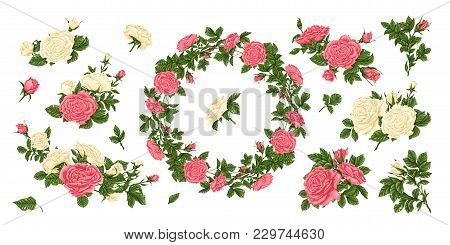 Big Set Of Pink And White Roses, And A Wreath Of Flowers. Vector Illustration.