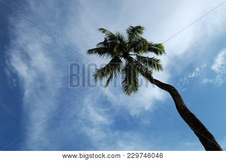 One Coconut Palm Tree On Cloudy Blue Sky Background