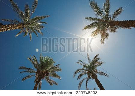 Four Palm Trees Against The Sky. Vertical Shot Up. Time Of Holidays And Recreation.