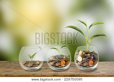Investment Concept. Growth Plant On Coins Three Step In Clear Glass Bottle On Wooden Table With Gree