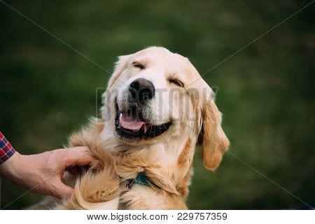 Close View Of Funny Young Happy Labrador Retriever. Smiling Dog.