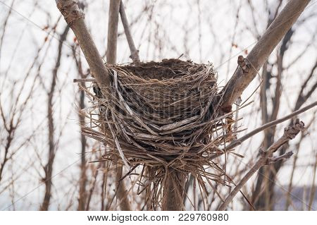 Snow-covered Nest Abandoned In The Winter Forest. Snowy Deserted Bird House