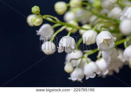 Lily Of The Valley Flowers On A Black Background. Close-up