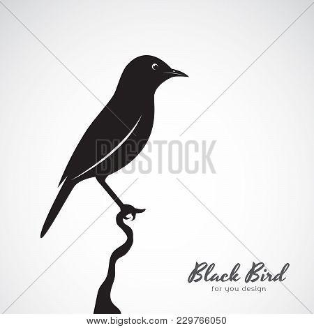 Vector Of A Black Bird On White Background. Animal. Easy Editable Layered Vector Illustration.