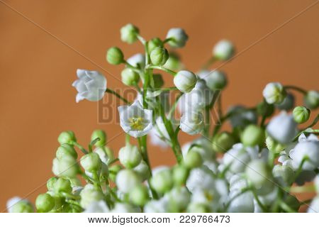 Lily Of The Valley Flowers On A Orange Background. Close-up