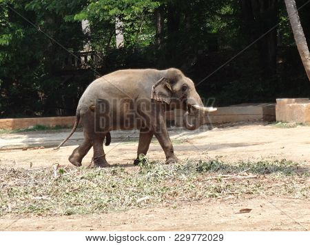 A  Elephant Kid Going Near To Mother At Zoo.