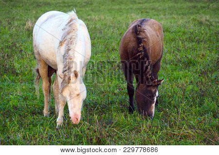 Wild Free Horse Mare And Foal. The Herd Unattended In Nature.