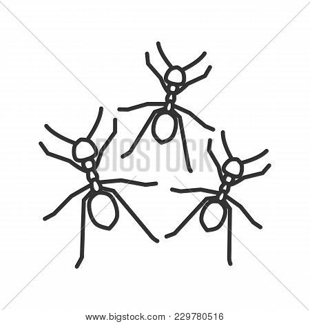 Ants Linear Icon. Thin Line Illustration. Contour Symbol. Vector Isolated Outline Drawing