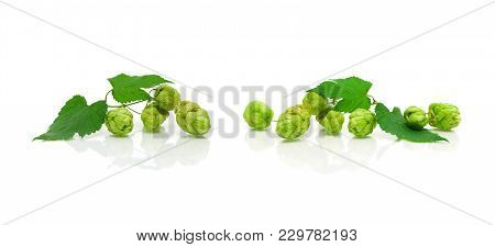 Branch Of Hops On A White Background With Reflection. Horizontal Photo.