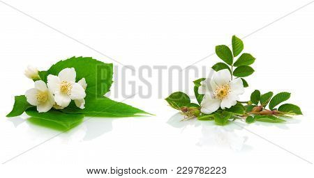 Flowers Of Jasmine And Dogrose On A White Background. Horizontal Photo.