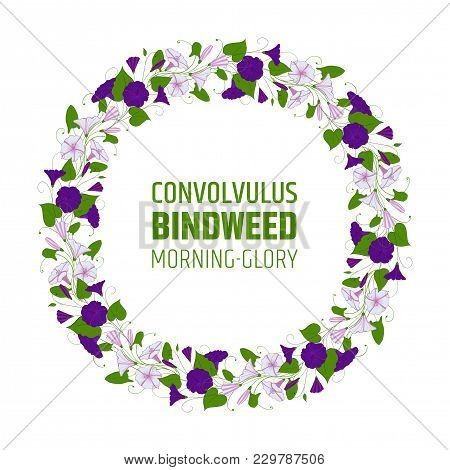 Garland With Bindweed Flowers. Element For Design Wreath Morning-glory. Convolvulus Blossom Pattern.