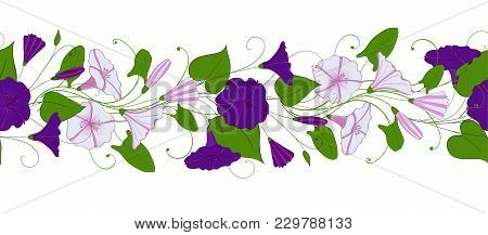 Seamless Pattern Of Convolvulus. Garland With Bindweed Flowers. Morning-glory Ornament. Vector Flora