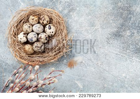 Quails eggs in nest and pussy willow. Easter greeting card. Top view with space for your greetings