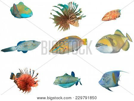 Collection Reef fish of Red Sea collection. Parrotfish, Lionfish, Grouper, Filefish, Wrasse, Triggerfish, Boxfish and Angelfish