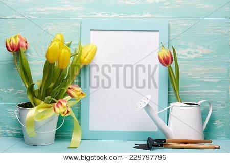 Gardening tools, watering can, fresh tulips flowers in a bucket and blank sheet in frame  on a wooden green background. Concept of spring gardening.