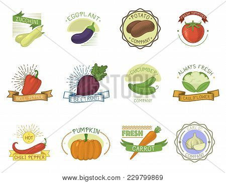 Vegetables Badge Vector Healthy Vegetably Tomato, Carrot, Potato Vegetarians Pumpkin Organic Food Mo