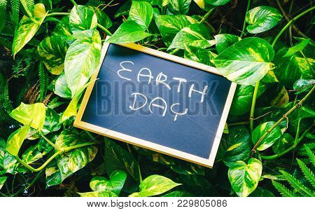 Earth Day Concept, Earth Day Word Writing On Chalkboard With Nature Green Leaves Background
