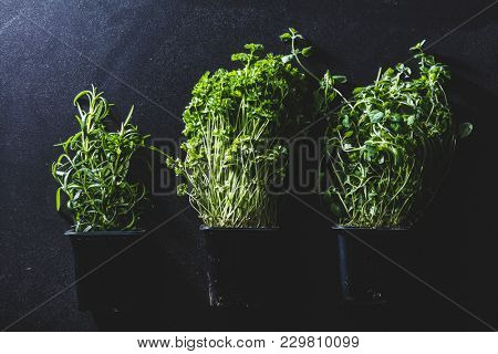 Three pots with different herbs laying on a black background. Organic spices. Freshness.