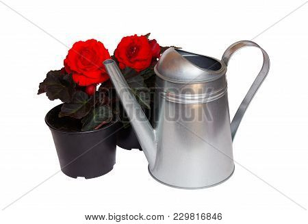 Watering Can And Seedlings Of Flowers Isolated On White Background