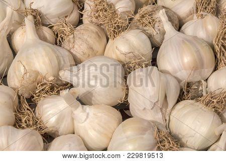 White Garlic Pile Texture. Fresh Garlic, Closeup Photo. Pile Of White Garlic Heads. White Garlic Hea